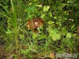 «Массовый рост грибов начнется в сентябре». «Фонтанка ...