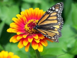 Image result for free downloadable picture of a flower