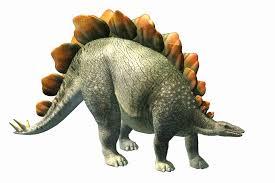 <b>Stegosaurus</b>: Bony Plates & Tiny Brain | Live Science