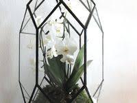 florarium: лучшие изображения (244)   Террариум, Суккуленты и ...