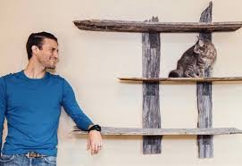 eco friendly feline furniture thats purrfectly gorgeousand safe for your cat cat safe furniture