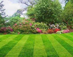 Image result for photos of lawn