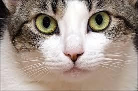 El lenguaje corporal del gato Images?q=tbn:ANd9GcQZJDwSmFtlV4GmzRPUIw5GxmGm4jrwhvpqLG1Qf_Rto_X5vQC-RA