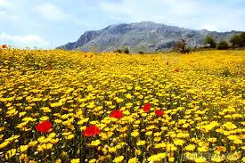 لكل محبي صور الطبيعة  اكبر تجميع لصور الطبيعة - صفحة 3 Images?q=tbn:ANd9GcQZL_hk5HJpf2LsEvDp5EzaEEBE3yrSpCuithQMFeLKBIOq1InBfQ