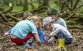 Image result for Forest school images copyright free