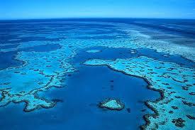 Resultado de imagen de gran barrera de coral