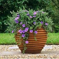 beautiful plant in a pot