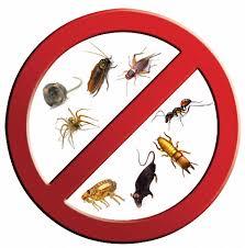 شركة مكافحة حشرات بالتربة بمنطقة مكة المكرمة