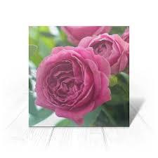 """Открытка """"<b>Розовые розы</b>"""" #2672019 от d_ari.design@mail.ru ..."""