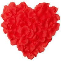 Wholesale Confetti Petals UK