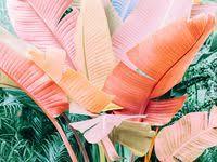 #Комнатные Растения: лучшие изображения (286) в 2020 г ...