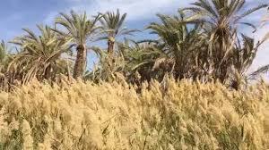 Gentle breezes and shady palms provide... - <b>Memo</b> Paris - Fragrances