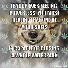 Stoner Dog Meme Generator - DIY LOL via Relatably.com