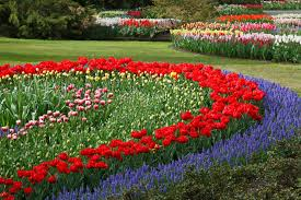 lawn care service tulips 21947 1920 back yard