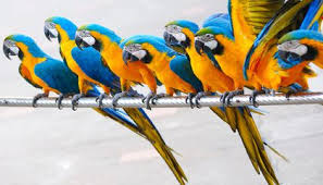 14 Fun Facts About <b>Parrots</b> | Science | Smithsonian Magazine