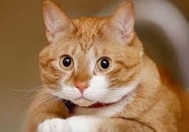 貓糧的圖片搜尋結果
