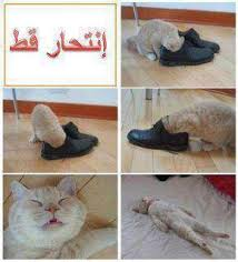صور مضحكة images?q=tbn:ANd9GcQ
