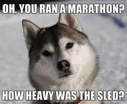 Ridiculously Funny Animal Memes for 2013 | Animals Zone via Relatably.com