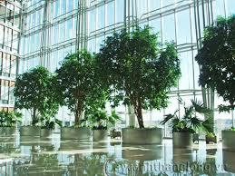 Kết quả hình ảnh cho cây trồng trong văn phòng