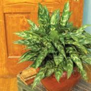 the best low light office plants best low light office plants