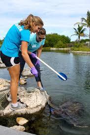 florida oceanographic society stuart fl volunteer spotlight three times each week caitlin foster spends her entire day at florida oceanographic coastal center as aquariums and life support volunteer caitlin helps