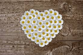Image result for hearts & daisies