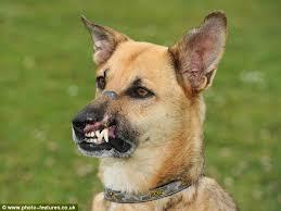 buy essay online cheap dog fighting   reportz   web fc  combuy essay online cheap dog fighting