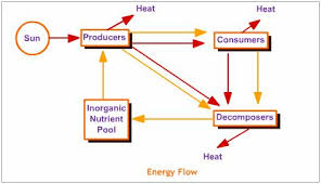 energy flow  our environment  science help  online science    diagramatic representation of energy flow