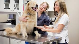 Autoimmune Disease In <b>Dogs</b>: Types, Symptoms, And Treatments ...