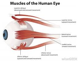 what is an oculogyric crisis pictures muscle relaxers can treat an oculogyric crisis by relaxing the muscles that control eye movement and allowing the eyes to come to a more natural resting
