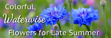 Image result for late summer