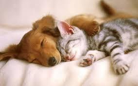 Bildresultat för dog cat pictures