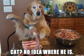 Guilty Dog - Meme on Imgur via Relatably.com