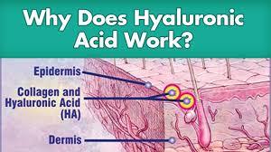 Image result for hyaluronic-acid