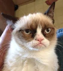 Grumpy Cat Thinks Fun is Overrated via Relatably.com