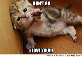 don't go - i love you! | Kitten Memes I <3 | Pinterest | Love ... via Relatably.com