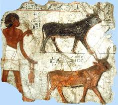 Farming in Ancient Egypt for kids