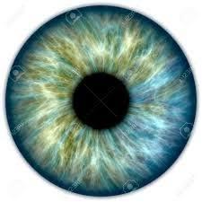 Bildergebnis für iris auge | Augen malen, Augen zeichnen, Augen