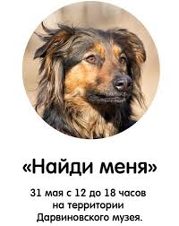 "Выставка бездомных <b>животных</b> ""<b>Найди меня</b>"""