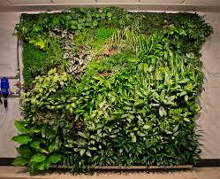 living wall kit tropical plants