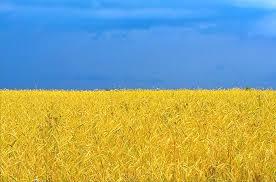 Украина назовет стоимость своей ГТС в начале 2014 года - Цензор.НЕТ 6604