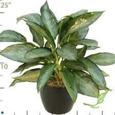 office plant catalog indoor plants for lobbies reception best low light office plants
