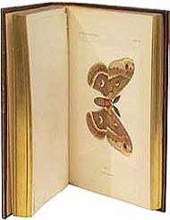 25 <b>Beautiful Butterfly</b> Books