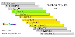 Potentilla tabernaemontani [Cinquefoglia di Tabernaemontanus (J ...
