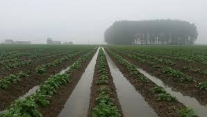 """Résultat de recherche d'images pour """"champs cultures pluie"""""""