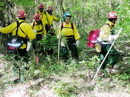 US Forest Service searching for Columbia debris near the Hemphill  Texas site  Credit  Space Safety Magazine
