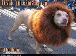 Dog in fancy dress | Funny Dirty Adult Jokes, Memes & Pictures via Relatably.com