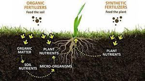 Image result for soil organic matters