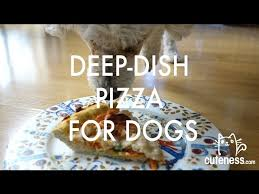 Image result for How to Make a Deep-Dish Pizza for Your Dog | Cuteness.com