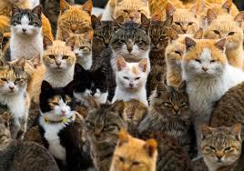 「猫 たくさん」の画像検索結果